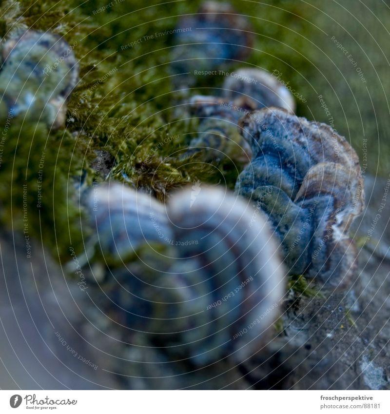 nicht nur grün Natur Umwelt glänzend Pilz Wildnis Einzeller Waldlichtung purpur Bakterien regenbogenfarben Baumstumpf Morcheln feinporiger Spaltpilz