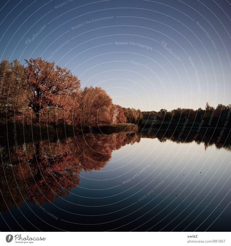 Abendgruß Natur Pflanze Wasser Baum Landschaft ruhig Ferne dunkel Umwelt Horizont Idylle Sträucher Unendlichkeit Seeufer Wolkenloser Himmel Herbstlaub