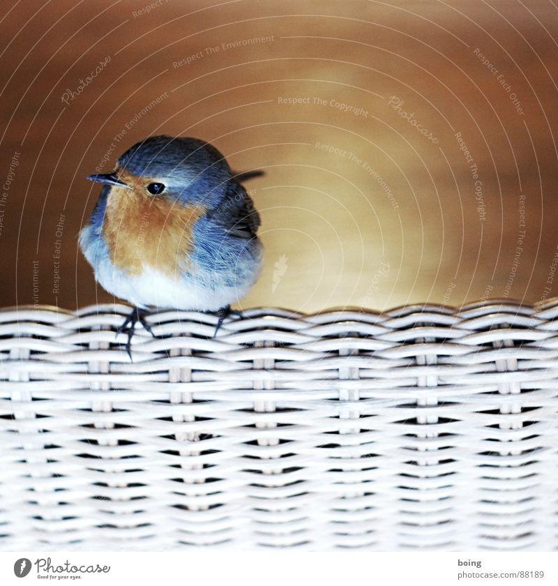 Lieber Vogel, fliege weiter! Nimm ein Gruß mit und ein Kuss Freude Stuhl Feder Café Schnabel Tier Singvögel Lenker Straßencafé Pfeifen Gezwitscher Eisdiele