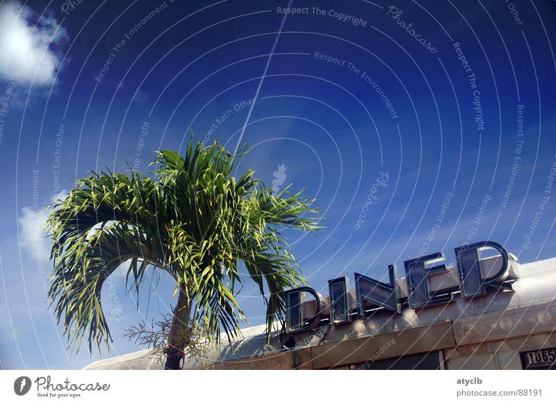 Palm Diner Miami Beach Palme Sommer Pflanze Süden Außenaufnahme Amerika Ferien & Urlaub & Reisen Ernährung Mahlzeit USA Wolken Speise Appetit & Hunger