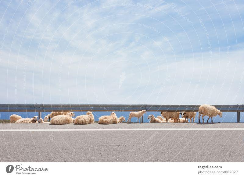 STRASSENSTRICH Ferien & Urlaub & Reisen Sommer Tier Reisefotografie Freiheit Linie Idylle Tourismus Landwirtschaft Postkarte Schaf Griechenland Tierzucht