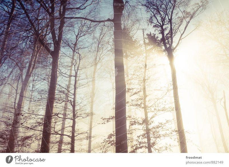 Lichtung Natur Sonne Baum Landschaft ruhig Winter Wald kalt Herbst Idylle Nebel fantastisch Schönes Wetter Trauer geheimnisvoll exotisch