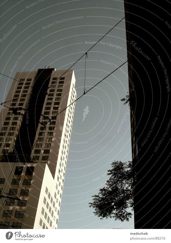 CONNECTING PEACEFULLY Haus Hochhaus Gebäude Material Fenster live Pflanze Baum Natur Block Beton Etage Apokalypse brilliant Endzeitstimmung himmlisch Götter
