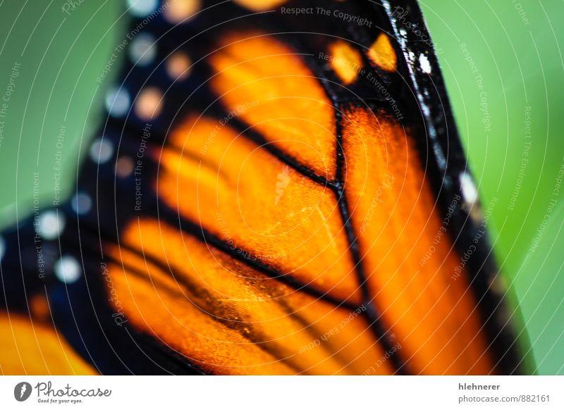 Natur Pflanze schön grün Farbe weiß Blume ruhig Tier schwarz natürlich Garten Flügel Beautyfotografie Tiefenschärfe Insekt
