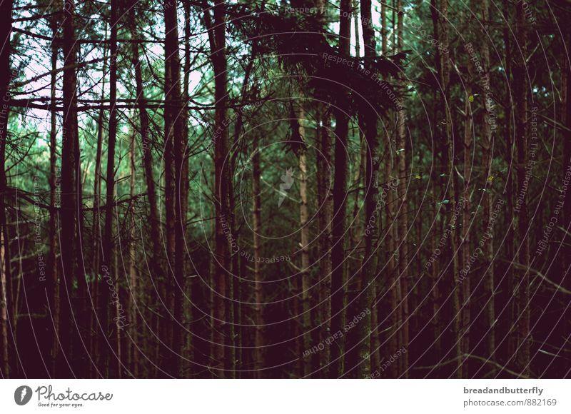 Aussicht vom Knusperhäuschen Natur Pflanze Baum dunkel Wald Umwelt bedrohlich gruselig