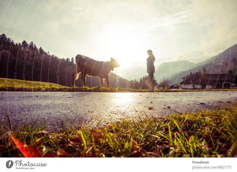 Gipfeltreffen Mensch feminin Junge Frau Jugendliche Erwachsene 1 Natur Landschaft Sonne Herbst Schönes Wetter Hügel Alpen Berge u. Gebirge Straße Tier Nutztier