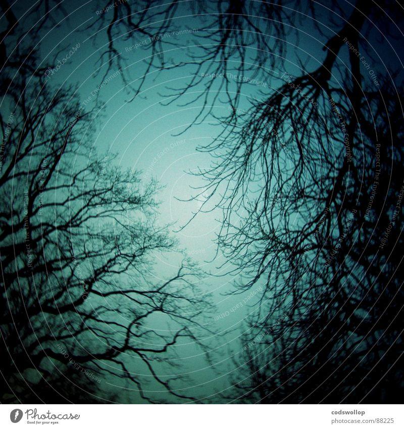 mirkwood Holzmehl Wald Angst beängstigend Baum Mitternacht gruselig Nacht Hexe verloren Panik dunkel gefährlich scary trees midnight branches Ast grausen