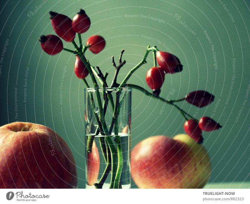 Herbstlicht 1 Kunst Stilleben Natur Sträucher Nutzpflanze Wildpflanze Hagebutten Zweige Apfel Obst Ernte Garten Feld Glas Vase Wasser ästhetisch dunkel elegant