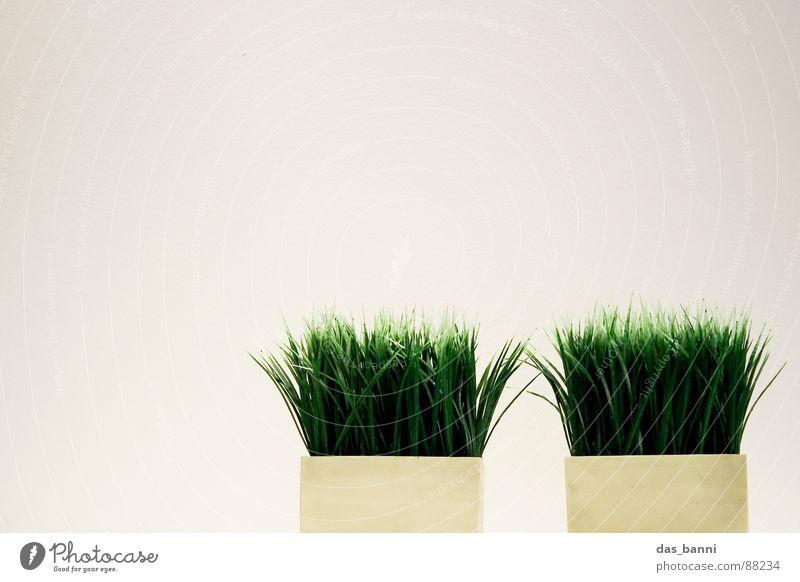gras² - Raum ist Luxus! Gras Halm Freisteller Vor hellem Hintergrund Textfreiraum oben Grasbüschel Textfreiraum links Blumentopf minimalistisch Objektfotografie