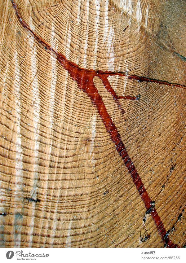 Tief im Gesunden Baum Holz Schmerz Blut Unfall Klimawandel Geäst Haarschnitt Säge