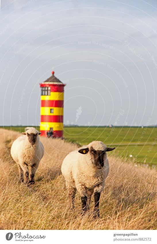 Mähfritzen vorm Pilsumer Leuchtturm Ferien & Urlaub & Reisen Sommer Meer Landschaft Wärme Herbst Architektur Wiese Küste Frühling wandern Ausflug weich Hochzeit