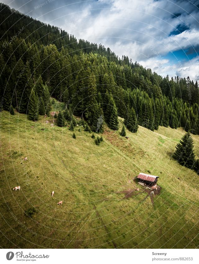 """Alm-Über""""flug"""" Himmel Natur Ferien & Urlaub & Reisen blau Pflanze grün Sommer Baum Landschaft ruhig Wolken Tier Wald Berge u. Gebirge Idylle Tourismus"""