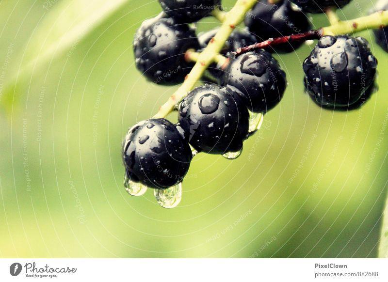 Regentropfen Lebensmittel Frucht Ernährung Landwirtschaft Forstwirtschaft Natur Pflanze Tier Wasser Wassertropfen Sträucher Garten Park Duft fallen Flüssigkeit