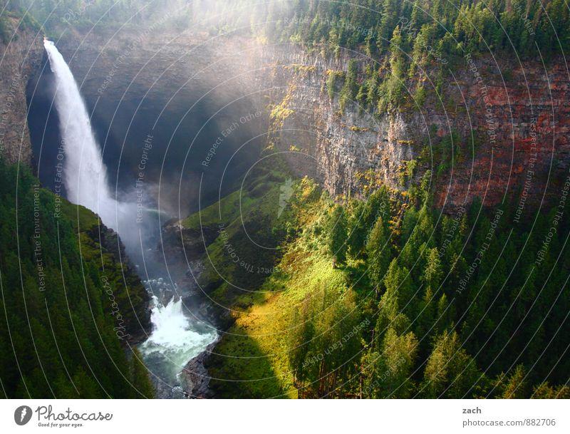 Verschwendung Natur Landschaft Pflanze Wasser Wassertropfen Sonnenlicht Frühling Sommer Schönes Wetter Baum Gras Moos Park Wiese Wald Hügel Felsen