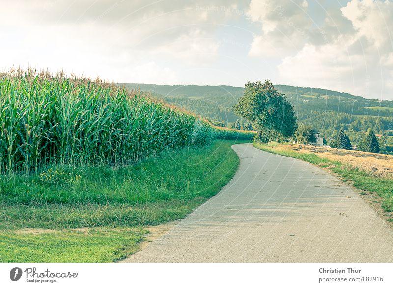 Wohin der Weg auch führt Natur Ferien & Urlaub & Reisen Pflanze Sommer Sonne Baum Erholung ruhig Wolken Umwelt Wiese Gefühle Gras Felsen Feld Zufriedenheit
