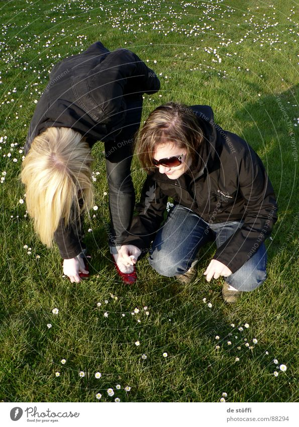 gänseblümchenbattlepflückaction Blume Freude Wiese Gras Frühling lachen Freundschaft 2 Zusammensein blond frisch mehrere Blumenstrauß Ernte Gänseblümchen Sonnenbrille