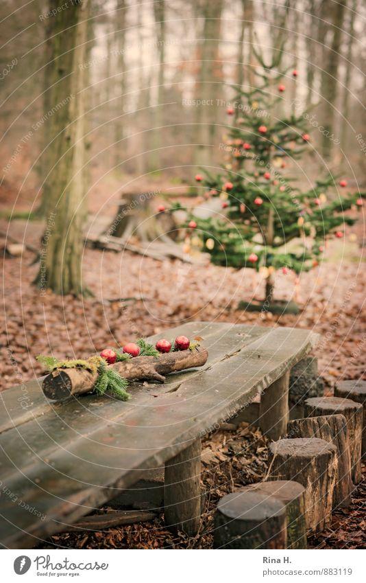 Weihnachten im Zauberwald IV [ bei den Sieben Zwergen] Feste & Feiern Weihnachten & Advent Umwelt Natur Winter Baum Wald Lebensfreude Vorfreude Geborgenheit