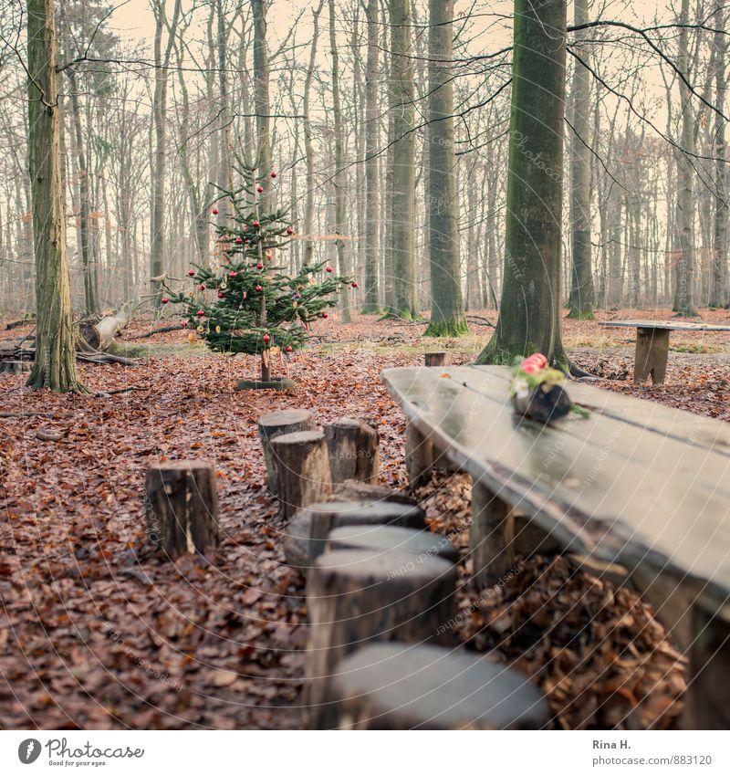 Weihnachten im Zauberwald III Weihnachten & Advent Natur Landschaft Winter schlechtes Wetter Baum Urwald authentisch Lebensfreude Vorfreude Geborgenheit
