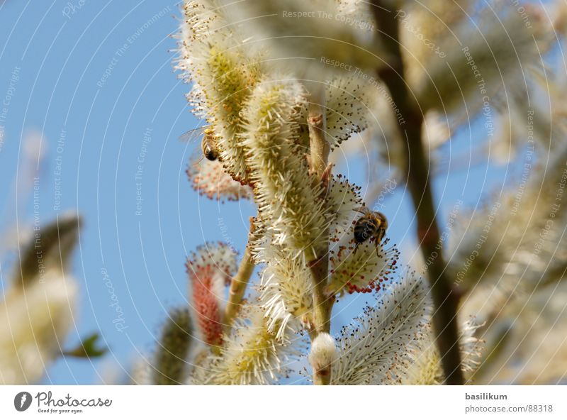 Frühlingsgefühle Himmel Blume grün blau Pflanze Tier gelb Blüte Frühling Wärme Physik Biene Pollen