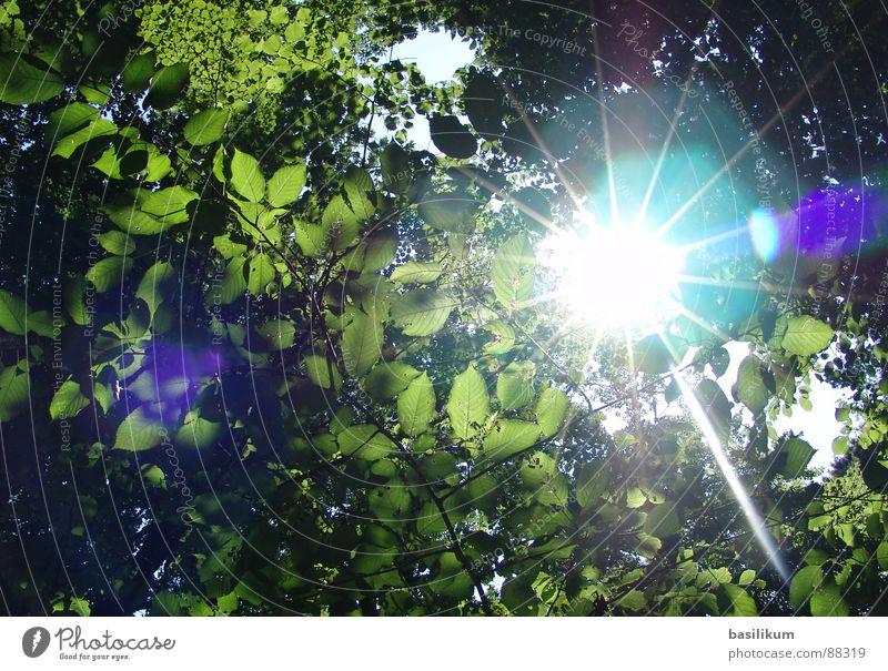 Sonnenstralen Sonne grün Sommer Blatt Wald Frühling Wärme hell Beleuchtung Himmelskörper & Weltall