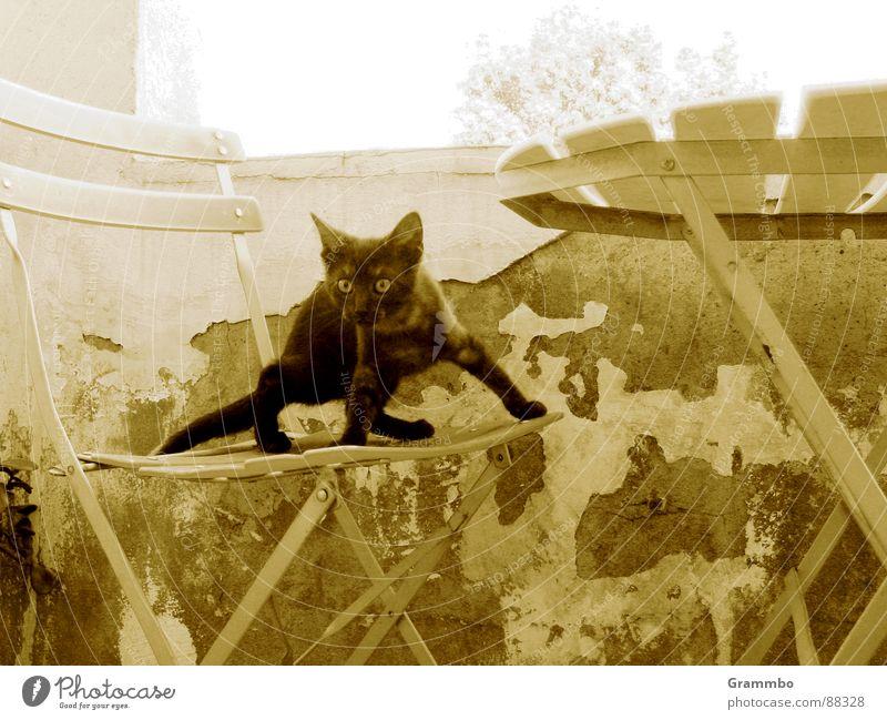 Wunderbare Welt der Schwerkraft Katze schwarz Balkon Wand Putz Tisch Mörder springen Säugetier alt Stuhl