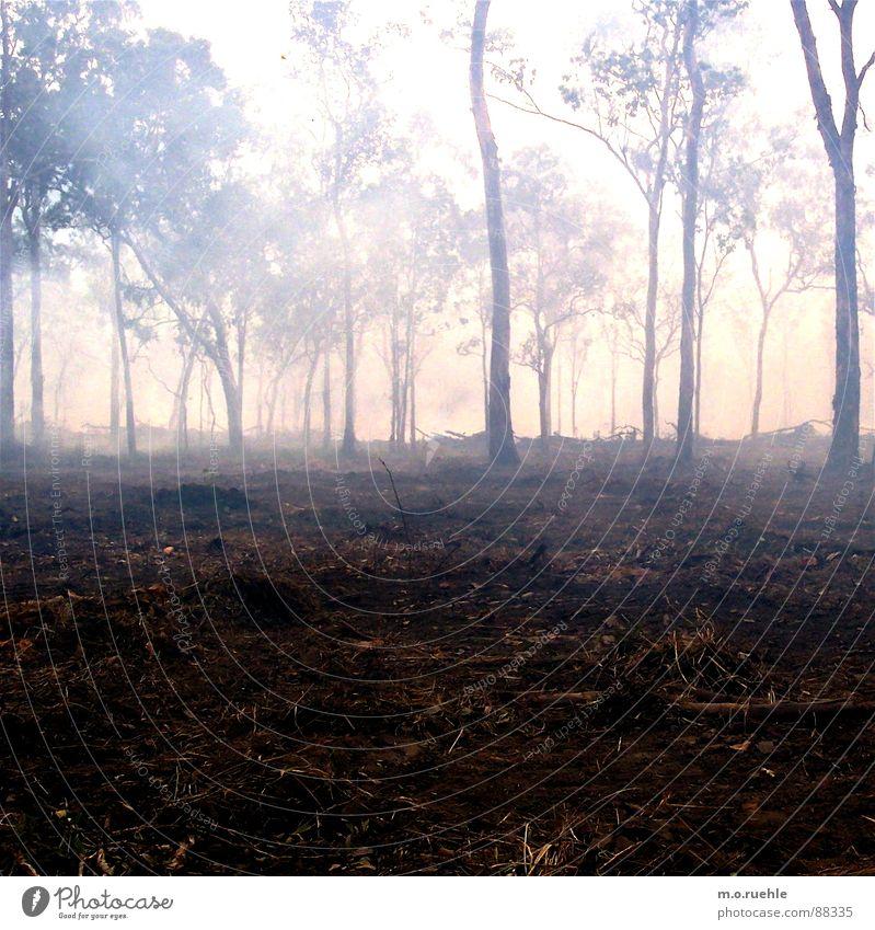 nebel, ein süßes wort. Natur Baum Wald Nebel Rauch mystisch Waldboden