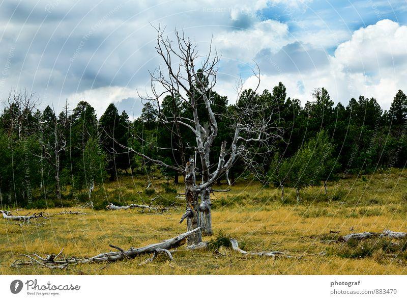 Alter Baum Natur Landschaft Pflanze Tier Erde Feuer Luft Wasser Wind Sturm Regen braun gelb gold grün schwarz Gefühle Stimmung Freude Glück Erotik schön Sex