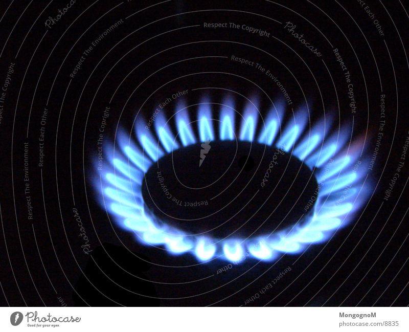 Gasflamme Herd & Backofen Physik Elektrisches Gerät Technik & Technologie Flamme blaue Flamme Wärme Makroaufnahme