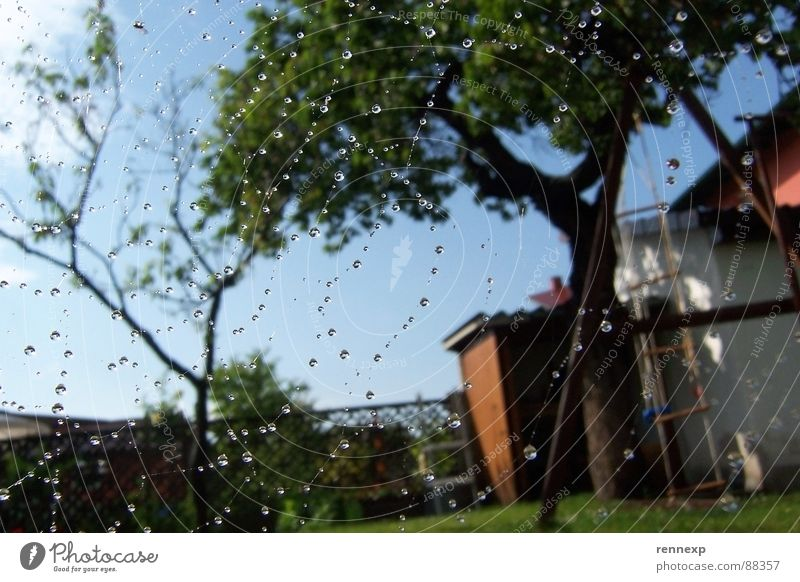 o.o.o tropf tropf o.o.o Natur Wasser Himmel Baum Sommer Wiese Garten Wärme Regen Wetter Wassertropfen Fröhlichkeit Netz Insekt Physik feucht