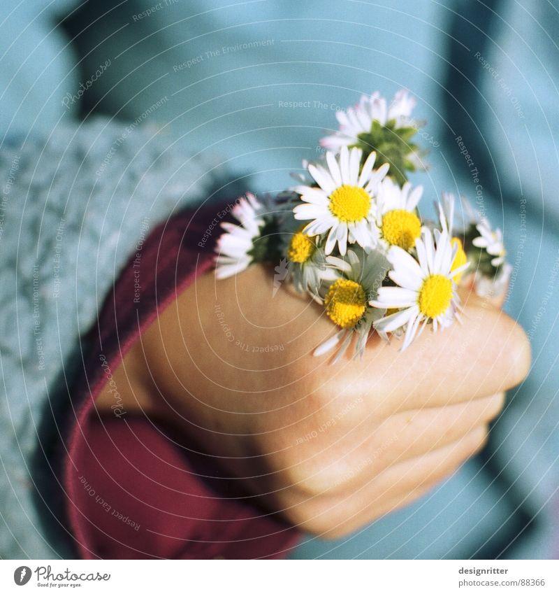 Hab ich für dich gepfl... Kind Mädchen Hand Blume Gänseblümchen festhalten drücken Blumenstrauß edel child flower daisy tight schön push bunch Muttertag