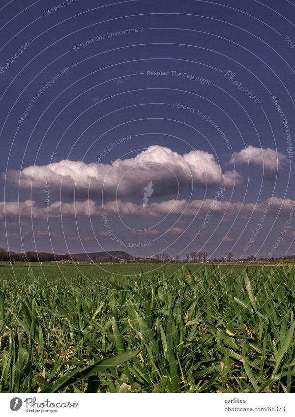 Hingefallen .... Feld Frühling keimen Pflanze Wolken Kohlendioxid Froschperspektive Horizont Wetter stimmt ja garnicht alles gelogen soll nur lustig klingen