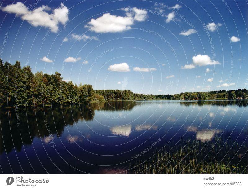 Schwedische Wasserwirtschaft Himmel Natur Ferien & Urlaub & Reisen Pflanze Landschaft Wolken Ferne Wald Umwelt Freiheit Horizont Tourismus Idylle offen groß