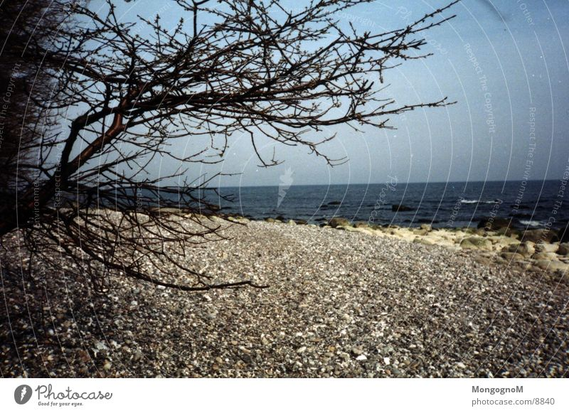 Baum am Strand Wasser Stein