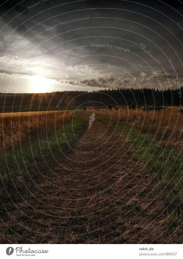 Mitten in der Pampa Gras Wiese Wald Wolken Sonnenuntergang dunkel grün Rheingau Waldwiese Sommer Himmel Wege & Pfade Einsamkeit Ferne