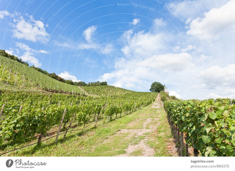 ZUM WOHL Himmel Natur Ferien & Urlaub & Reisen Himmel (Jenseits) blau grün Sommer Sonne Erholung Reisefotografie Deutschland Tourismus Idylle Postkarte Wein