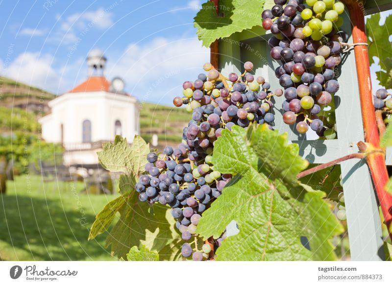 WEIN Natur Ferien & Urlaub & Reisen Himmel (Jenseits) blau grün Sommer Sonne Erholung Reisefotografie Deutschland Tourismus Idylle Postkarte Wein himmlisch