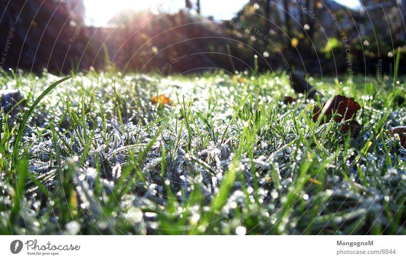 Raureif grün Winter kalt Herbst Wiese Gras Eis Frost Rasen Halm