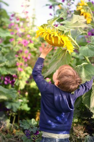 Riesenzwerg Freizeit & Hobby Spielen Garten Mensch Kind Junge 1 3-8 Jahre Kindheit 8-13 Jahre Natur Sommer Herbst Schönes Wetter Blume Blüte Wiese Feld groß