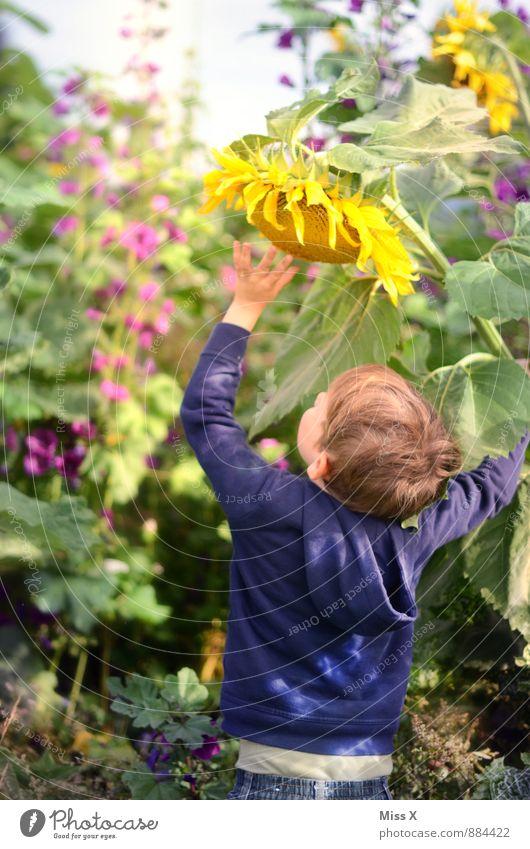 Riesenzwerg Mensch Kind Natur Sommer Blume gelb Wiese Herbst Blüte Junge Spielen Garten Freizeit & Hobby Feld Kindheit groß