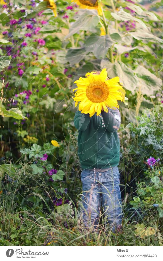 Sonnenschein Freizeit & Hobby Spielen Garten Mensch Kind Kleinkind 1 1-3 Jahre 3-8 Jahre Kindheit Natur Sommer Herbst Blume Blüte Feld Gefühle Stimmung Freude
