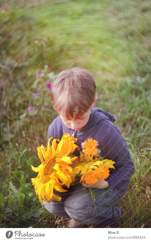 Blumenkind Mensch Kind Kleinkind Junge 1 3-8 Jahre Kindheit 8-13 Jahre Sommer Herbst Schönes Wetter Blüte Wiese sitzen Sonnenblume Blumenstrauß schenken