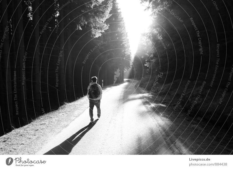 Harz 2 Ferien & Urlaub & Reisen Berge u. Gebirge wandern Mensch maskulin Mann Erwachsene 18-30 Jahre Jugendliche Umwelt Natur Sonne Frühling Pflanze Baum