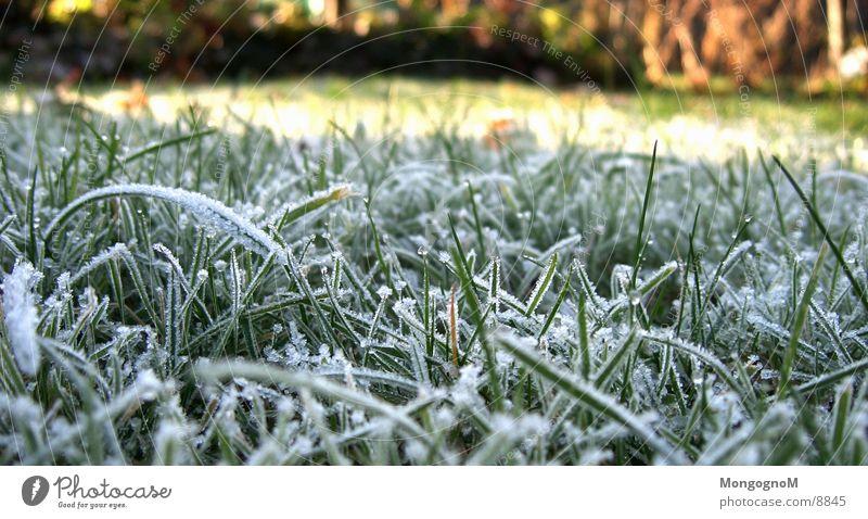Raureif nr.2 Gras grün kalt Winter Herbst Halm Wiese Reureif Frost Eis Rasen