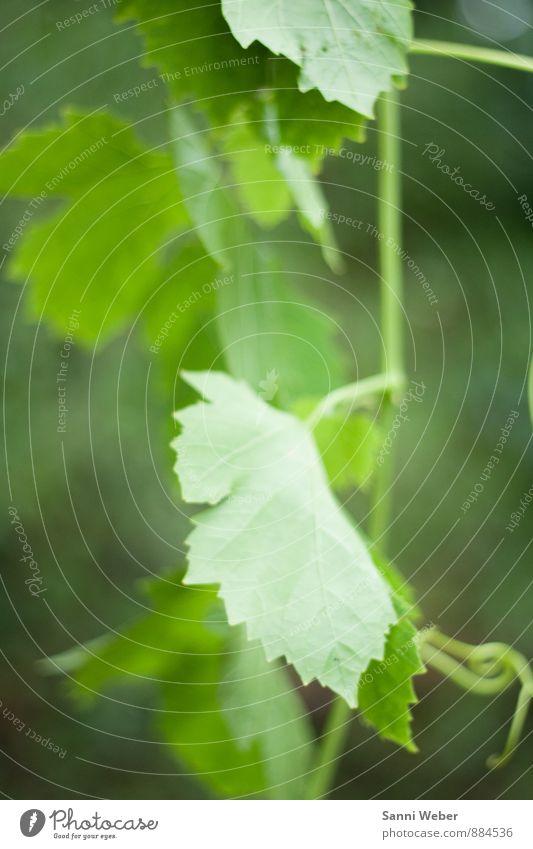 Sommer Natur Landschaft Pflanze Tier Sträucher Garten Dorf Menschenleer Blühend hängen leuchten träumen wandern frisch Gesundheit natürlich grün Stimmung