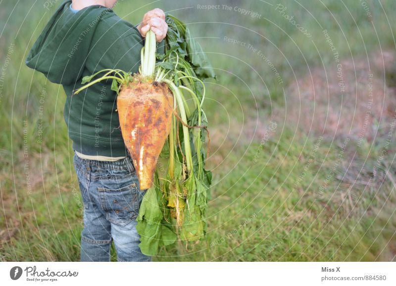 Rüben Mensch Kind Junge Gesundheit Garten Lebensmittel Freizeit & Hobby Feld dreckig Kindheit frisch Ernährung lecker Ernte Bioprodukte Kleinkind