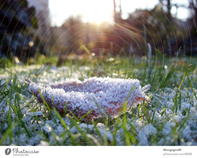 Blatt Gras Raureif Wiese Sonnenstrahlen