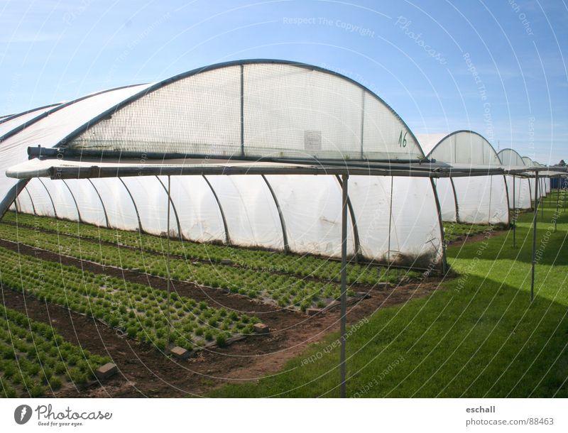 Aufziehn blau grün Pflanze Feld Landwirtschaft Ackerbau Samen Gartenarbeit Forstwirtschaft Aussaat Gärtner Baumschule Gewächshaus Nutzpflanze Setzling Folie