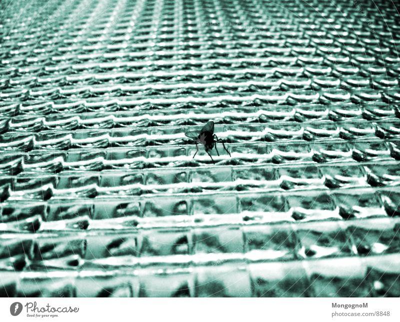 Fliege am Fenster Glas Makroaufnahme Glasscheibe