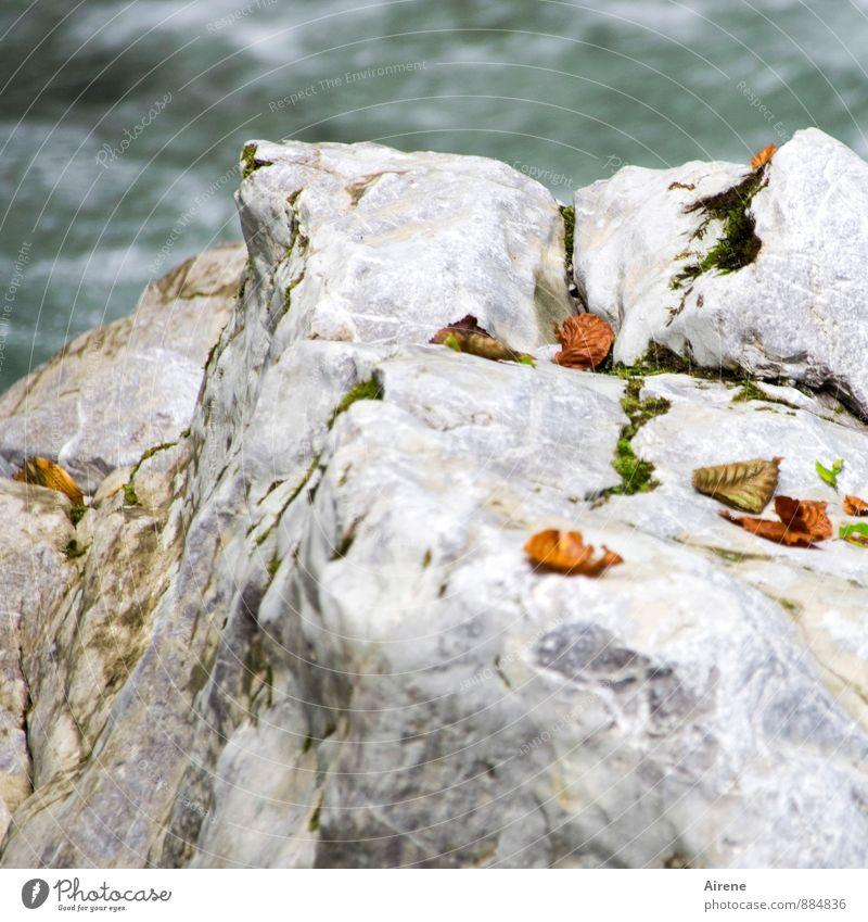 Streublättchen Natur Landschaft Urelemente Wasser Herbst Blatt Herbstlaub Felsen Schlucht Bach Wildbach Felsenschlucht Stein fallen liegen Flüssigkeit frisch