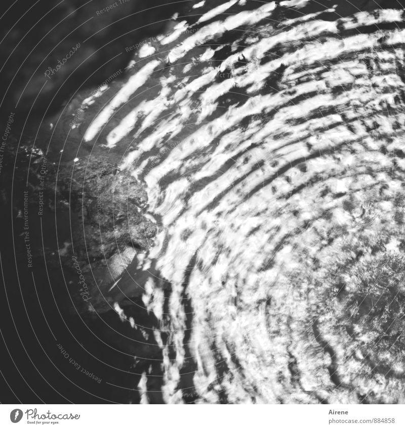 Interferenz Wissenschaften Urelemente Wasser Kreis Wellen konzentrisch Flüssigkeit kalt nass rund schwarz weiß Bewegung Genauigkeit Kontrolle Ordnung Präzision